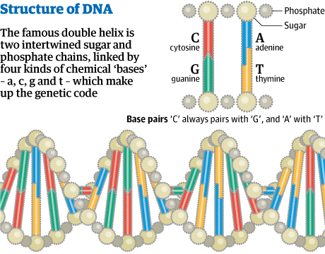 DNA structure 001
